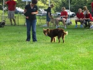 Fastest fetch contest