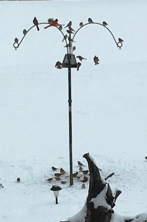 Howard & Katy Wise shared this pic of some snowbirds