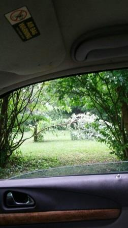 Julia Spies, of Greenville, shared this photo of a tree in her backyard, downed by Sunday's storms.