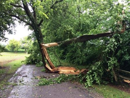 A tree down on Rick Shaw Lane, courtesy of Roger Cornelius.